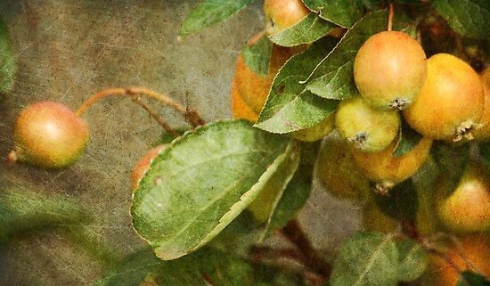 ~ Fruits of Autumn ~ by Lynda Heins