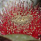 The Fabulous Mottlecah Flower by Leonie Mac Lean