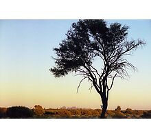 Outback Tree Silhouette Photographic Print