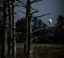 Desolation by Lea  Weikert