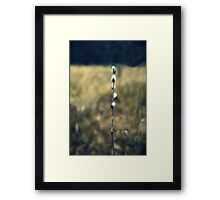 Pussy Willow Prairie Art Kitty Todd Nature Preserve Framed Print