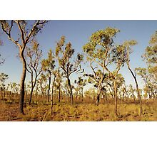Trees in the Australian Outback  Photographic Print