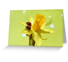 Sunny ladies Greeting Card