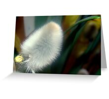 Pussy Willow! Greeting Card