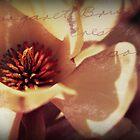 My Magnolia Blossum by John Tomasko