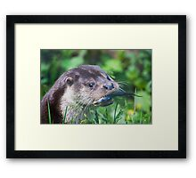 This is my fish>>>>>>>> Framed Print