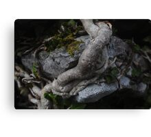 Ivy moudling around ancient stone Canvas Print