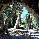 Sequoia Archway by Dawn Parker