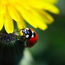 Ladybird by Sophie Watson