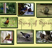Photo collage of Songbirds by astonishann