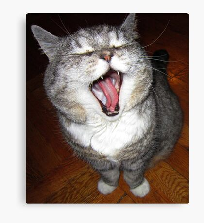 Never yawn during a photo session! Canvas Print