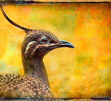 Not a RoadRunner. by alan shapiro