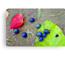 Blue Seeds with Leaves Canvas Print