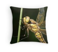 Black Tailed Skimmer (Tenneral) Throw Pillow