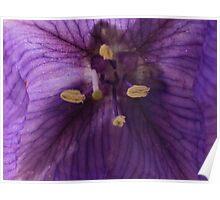purple flower macro Poster
