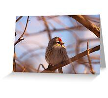 Birding - Cobden Ontario Greeting Card