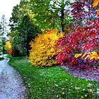 Autumn Path  by Marcia Rubin