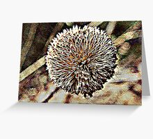 Seed Pod Art 1 Greeting Card