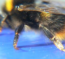 bumble Bee:) by LisaBeth