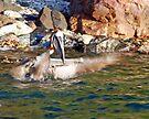 Pelican Bath by Leon Heyns