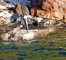 Pelican Bath by Leon Heyns