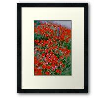 Poppy flowers  - wonderful spring et Austria (Niederösterreich) . . by Brown Sugar . Views (142). Dziękuję ! OK! VSOP !!! Fav (2) ! Framed Print