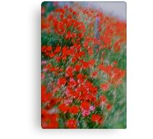 Poppy flowers  - wonderful spring et Austria (Niederösterreich) . . by Brown Sugar . Views (142). Dziękuję ! OK! VSOP !!! Fav (2) ! Metal Print