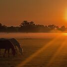 Sunrise, Osceola County Florida by Phillip  Simmons
