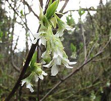 Tree Blossom by Christina Herbert