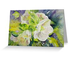 Lenten Rose Greeting Card