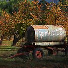 Apricots for Sale by gommie