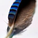 Feather of blue bliss by Darren Bailey LRPS