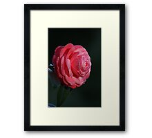 One for the ladies! 0509 Framed Print