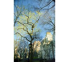 Central Park Branch Sky Photographic Print