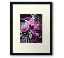 Orchid Collection - 8 Framed Print