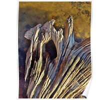 Sunny Driftwood Poster