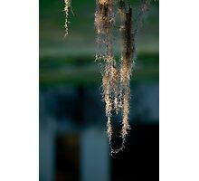 Spanish Moss Dawn Photographic Print