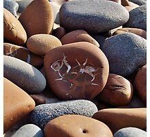 Gray and Brown Beach Stones Photographic Print