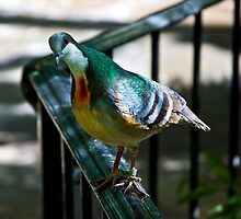 Colorful Feathers by Raymond Holt