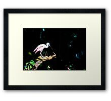 Spoon Bill Framed Print