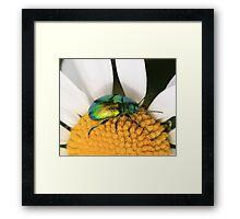 Green beetle Framed Print