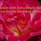 double delight rose halm quote by dedmanshootn