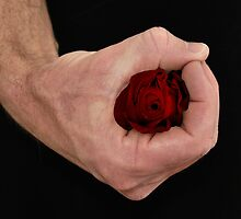HAND ROSE by Thomas Barker-Detwiler