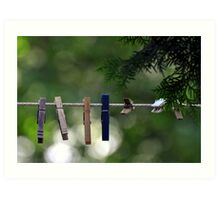 Clothes Pegs and Pine Art Print