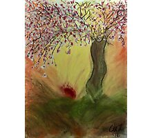 Cherry Blossom Tree of Mine, Our Rising Sun Photographic Print