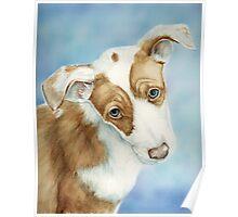Ibizan Hound Puppy Poster