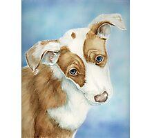 Ibizan Hound Puppy Photographic Print