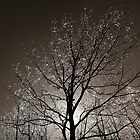 Sparkling Ice on Tree Branches by Kathilee