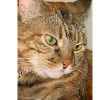 Pretty Cat with yellow eyes Photographic Print