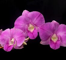 purple orchid by lensbaby